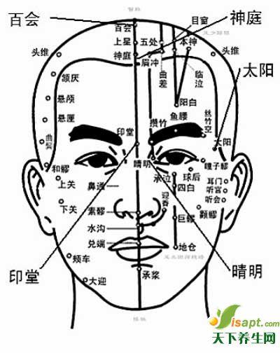 人体重要穴位——头部重点穴位