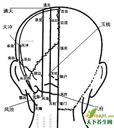 人体重要穴位——头部及颈部重点穴位图