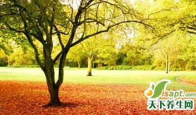 国医大师张琪:身平心和 焉不长寿
