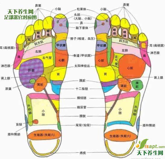养生须知:足部反射区大揭秘