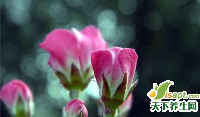 春季养生3重点:调神 活动 宽身