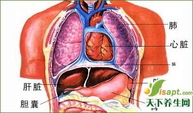 五脏调养:脾胃与心同养
