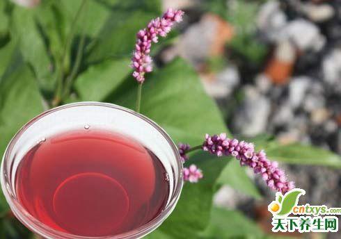 治病常用药酒-肿瘤(一)